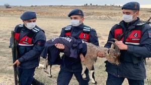 Jandarma, yavru yaban keçisini montuyla soğuktan korudu