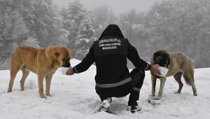 Bursada soğuk havada sokakta yaşayan sahipsiz hayvanlar unutulmadı