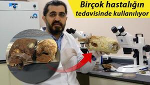 Ölümsüzlük mantarı Türkiyede üretildi Fiyatı dudak uçuklattı...