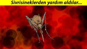 Japonyadan çığır açacak buluş... Sivrisineğin koklama duyusundan kanser dedektörü geliştirdiler