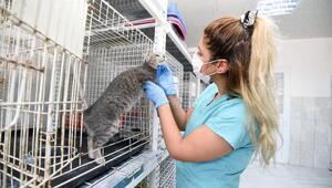 Muratpaşa hayvan barınağında şefkat ve sevgi mesaisi