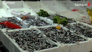 Hamsi avı yasağının 1 yıl uzatılması çağrısı