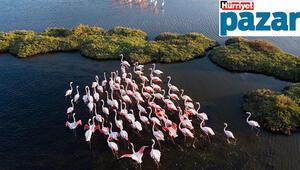 Kızılırmak Deltası'ndan sonra Gediz Deltası da UNESCO Dünya Mirası Listesi'ne girme yolunda... Darısı diğerlerinin başına