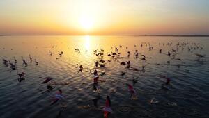 Hem flamingoları hem de fotoğrafseverleri ağırlıyor: Akyatan Lagünü