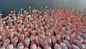 İstanbul Boğazında kuş türü arttı