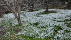 Kuşadasına 6 yıl sonra kar yağdı