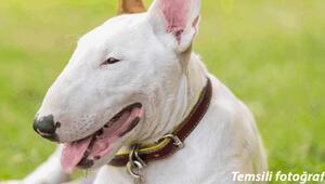 İskoçya'da akılalmaz bir olay yaşandı, tacize uğrayan kadını köpek kurtardı