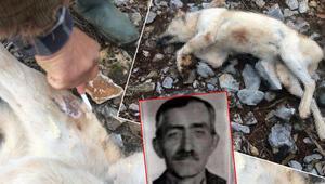 İsyan ettiren olay Köpeğini fazla ekmek yiyor diye öldürdü