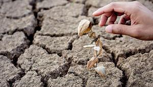 Küresel ısınmanın etkisini 6 adımda hafifletebiliriz