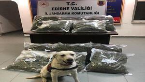 Edirne'de 4 milyonluk uyuşturucuyu narkotik köpeği 'Taklit' buldu