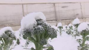 Meteoroloji uyarmıştı İstanbul'da seraları don vurdu: Fiyatları etkileyecek
