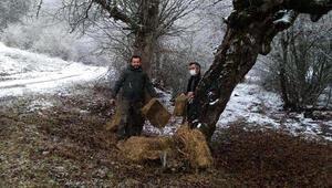 Tokatta yaban hayvanları için doğaya yem bırakıldı