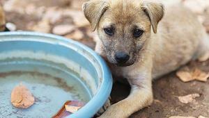 Hayvan Hakları yasasıyla ilgili yeni gelişme:  Hayvan Hakları Yasası kabul edildi mi,  ne zaman yasalaşacak