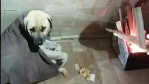 Sivaslı pideci, üşüyen köpeğin üzerine battaniye örtüp, yanına ateş yaktı