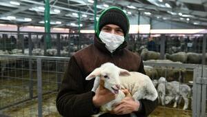 Mustafakemalpaşa Hayvan Pazarında üreticilerin yüzü gülüyor