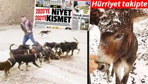 Son Dakika: Yeter Hayvan hakları yasası çıksın artık