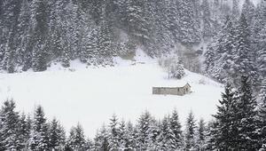 Tarihi İpek Yolundaki Zigana Dağında kış güzelliği yaşanıyor