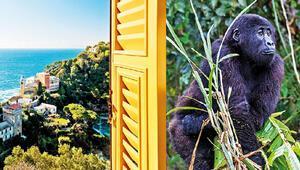 Berlin'de bir pencere veya vahşi doğada bir goril
