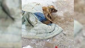 -15 derecede kediler 6 saat köpekler 17 saat aç kalırsa donarak ölür