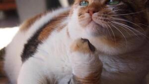 Ekranların sevilen kedisi Zümrüt Şaziye, ihtiyaç sahiplerine el uzatmaya devam ediyor