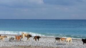 Demrenin plajları kısıtlamada onlara kaldı