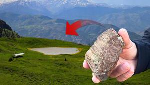 Gümüşhanede 160 milyon yıllık ağaç fosillerinde yeni türler bulundu