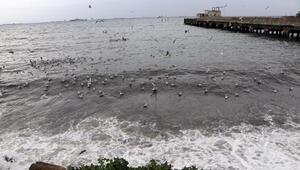 Tekirdağda fırtına: Eğitim uçuşları iptal edildi, feribot seferleri aksadı