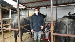 Samsunda Manda Islah Projesi üretimi artırdı