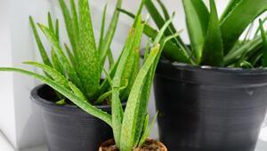 Evinizde kolayca yetiştirebileceğiniz bitkiler