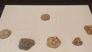 2 milyon yaşında olduğu değerlendirilen 6 deniz yıldızı fosili ele geçirildi