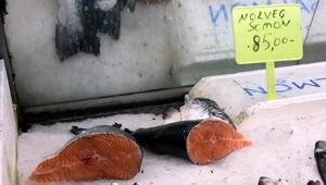 Karadeniz somonu Norveç somonunun pabucunu dama attı