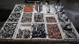 Trabzon'da avı yasaklanan hamsiden sonra en gözde istavrit ve mezgit oldu