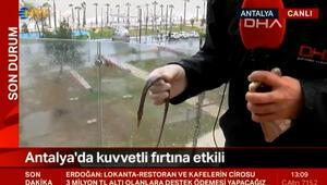 Şiddetli fırtına, denizdeki balığı balkona fırlattı