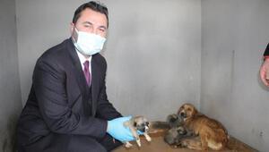 Donmak üzereyken bulunan köpek ve 8 yavrusuna belediye sahip çıktı
