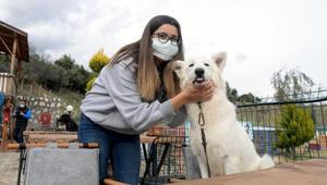 Bu kafenin müşterileri köpekler Türkiyede ilk