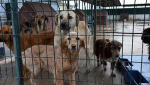 Pandemi döneminde hayvan barınağında yer kalmadı