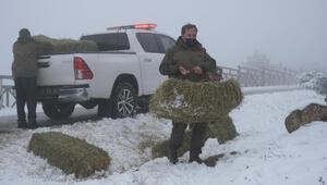Karla kaplı Spildeki yaban hayvanları için yem bırakıldı