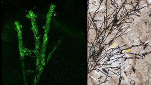 Heyecanlandıran keşif Çin'de 635 milyon yıllık mikrofosil bulundu