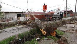 Çanakkale'de lodos fırtınası ağaçları devirdi
