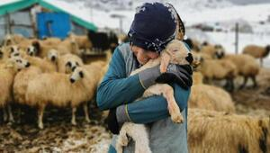 Tuncelide kışı zor şartlarda geçiren besicilerin kuzu sevinci