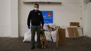 Kapıkule Sınır Kapısında bir tırda 230 kilogram esrar ele geçirildi