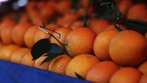 Türkiyenin portakal ihracatı salgınla yüzde 41 arttı