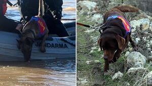 Suda kadavra arama köpekleri Mavi ve Negro ilki başardı