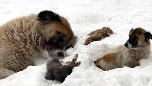 Vanda donarak ölen yavrularının başından 5 gündür ayrılmıyor