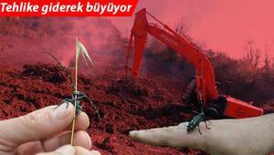 Trabzonda drakula tehlikesi Ağaçlar sökülüp yakılıyor