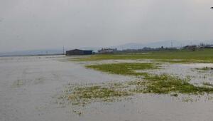 Amik Ovası'nda sular çekilmeye başladı