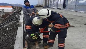 Boynu metal parçaya sıkışan köpek kurtarıldı