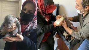 İşçilerin bulduğu yavru ayı korumaya alındı