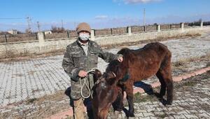 Tedavi edilen yaralı at sahiplendirildi