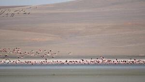 Flamingolar, Düden Gölüne erken geldi